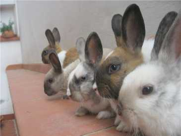 Photo: Sells Rabbits