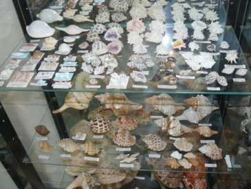 Photo: Sells Shells, fossil and stone COLLECTION