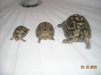 Photo: Sells Turtles