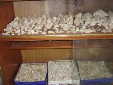 Photo: Sells Shells, fossil and stone